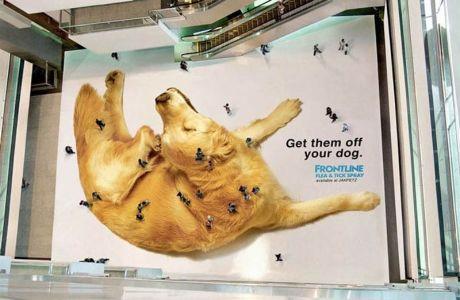 Hund-Guerilla Marketing